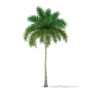 foxtail palm tree 9 3D