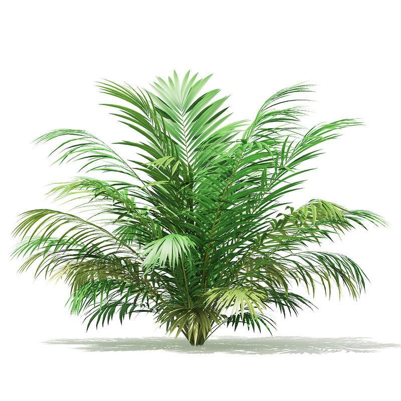 3D golden cane palm tree