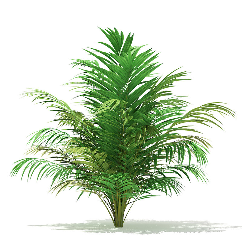 3D golden cane palm tree model