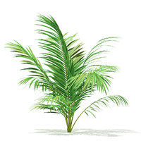 golden cane palm tree model