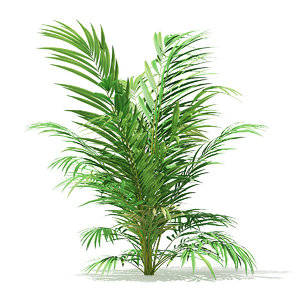 3D golden cane palm tree model