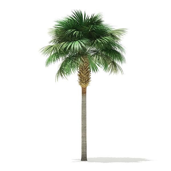 Free sabal palm tree 3D model - TurboSquid 1354721