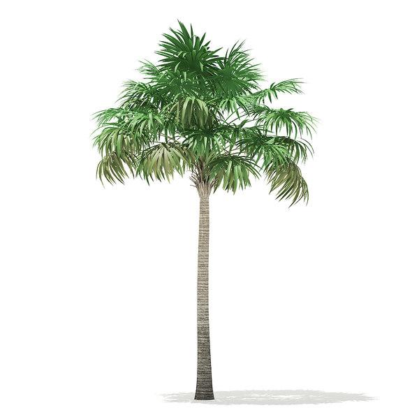 3D thatch palm tree 7 model
