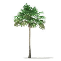 3D thatch palm tree 7 model