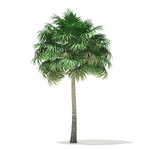 3D thatch palm tree 10m