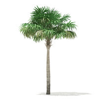 thatch palm tree 7m 3D
