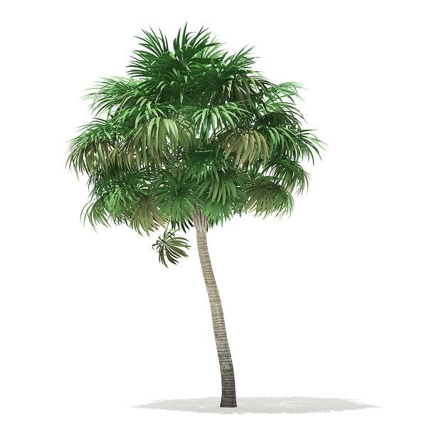 3D thatch palm tree 6