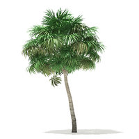 3D thatch palm tree 6