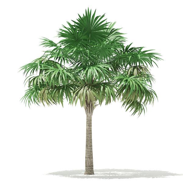 thatch palm tree 5 model