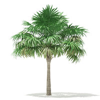 thatch palm tree 5 model