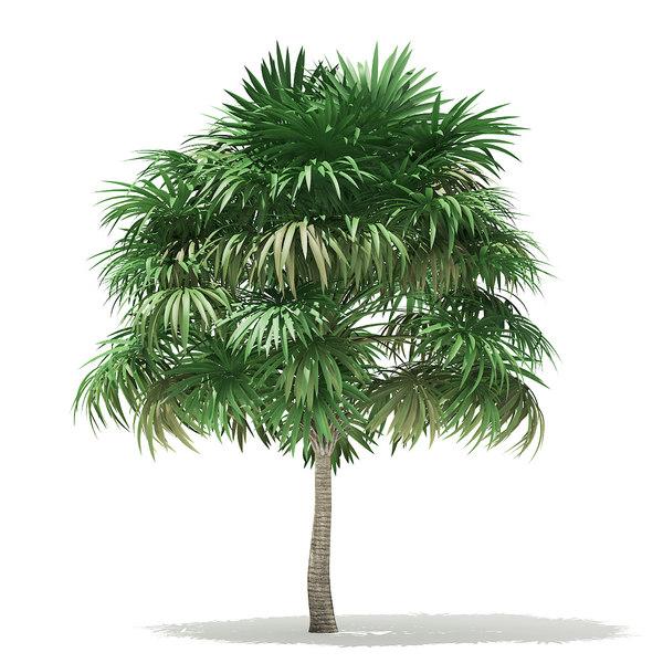 3D thatch palm tree 5