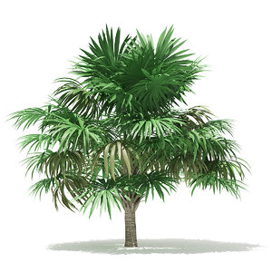 3D thatch palm tree 3