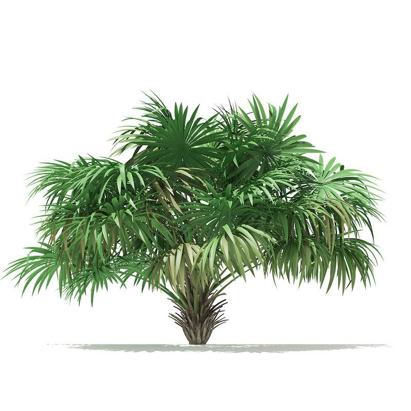 thatch palm tree model