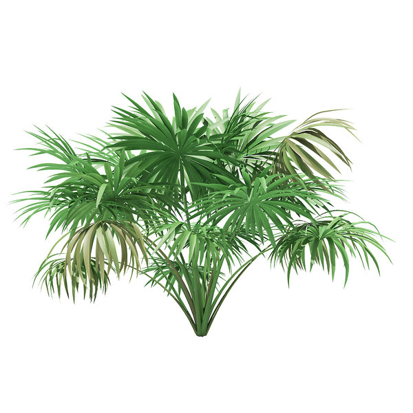 thatch palm tree 1 3D model