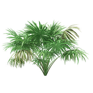 thatch palm tree 1 3D model
