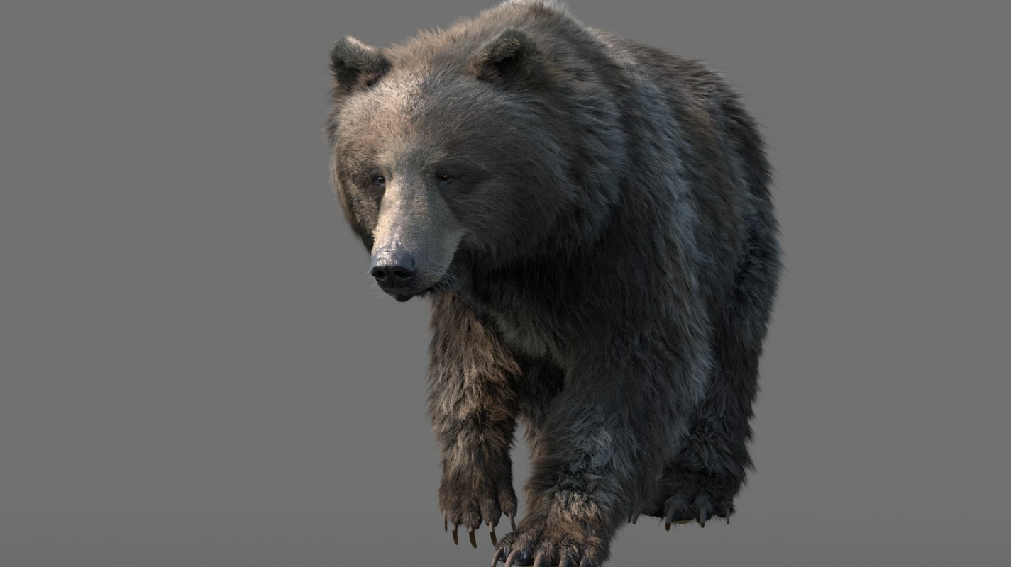 3D bear character animation