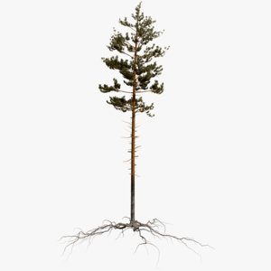 pine tree 2 3D model