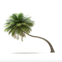 3D coconut palm tree 6