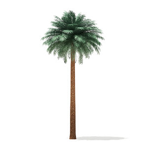 3D silver date palm tree