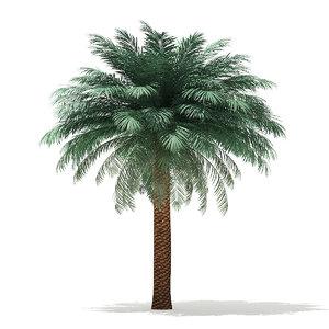 3D model silver date palm tree