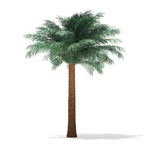 silver date palm tree 3D model