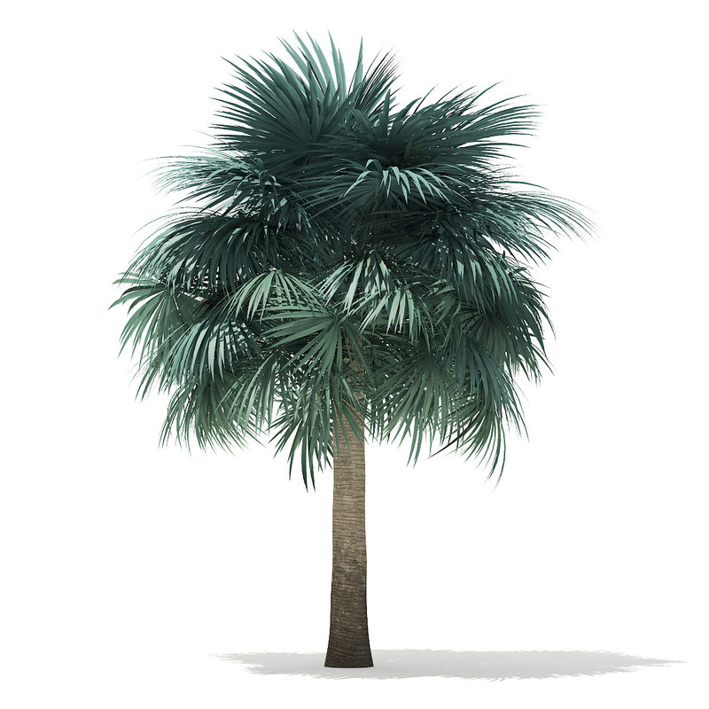3D silver fan palm tree