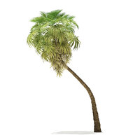california palm tree 9 3D