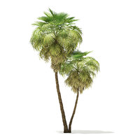 3D california palm tree 9 model