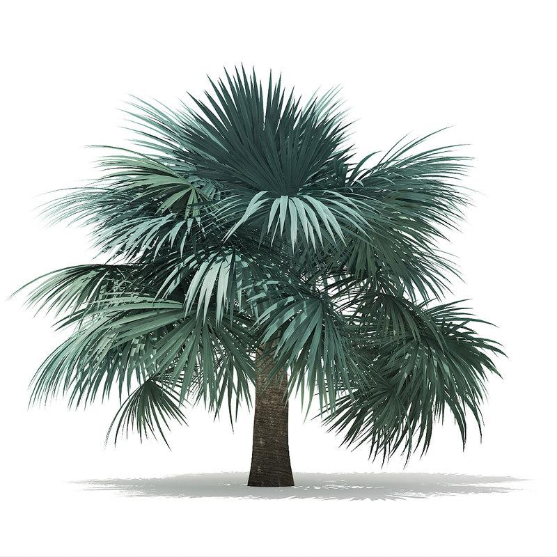 3D silver fan palm tree model