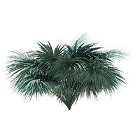 silver fan palm tree 3D model
