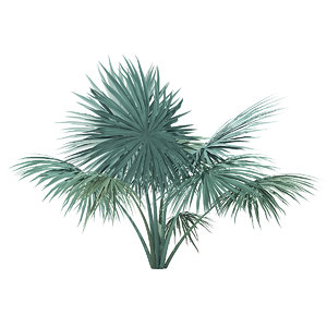 silver fan palm tree 3D