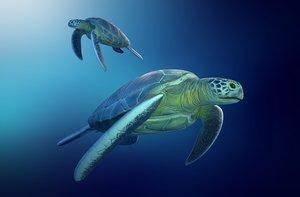 3D turtle sea