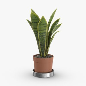 house-plant-01 3D model