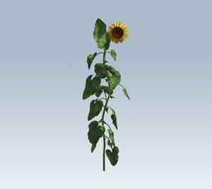 3D flower sun sunflower model