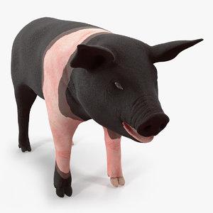 hampshire pig piglet 3D