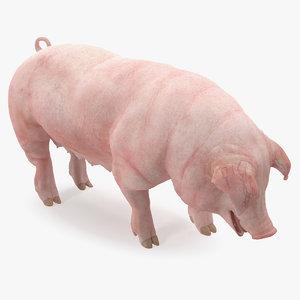 pig sow 3D model