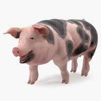 3D pig sow peitrain walking model