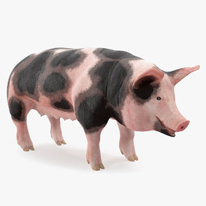 pig sow peitrain 3D model