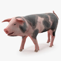 pig piglet pietrain walking 3D model