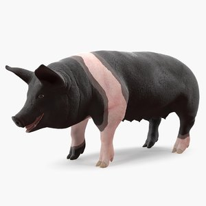 hampshire pig sow 3D model