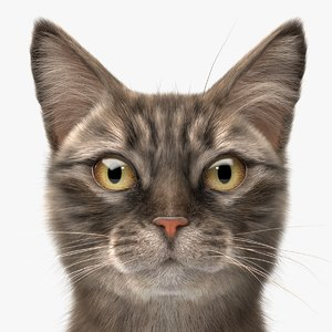 tabby cat hair 3D model