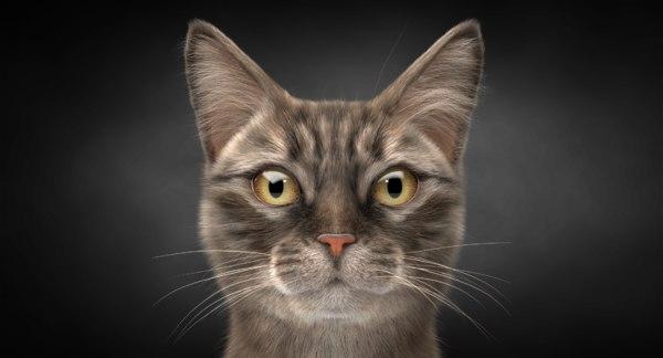tabby cat hair 3D model
