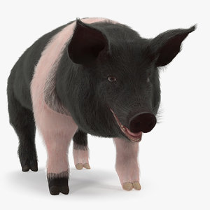 hampshire pig sow fur model