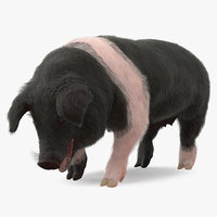 hampshire pig sow standing 3D model