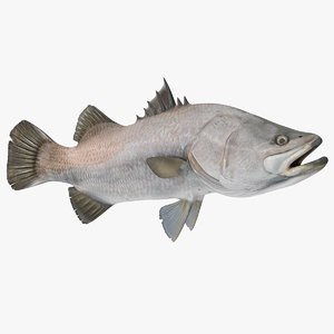 barramundi fish rigged 3D model