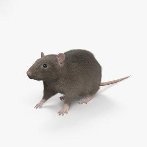 rat common 3D