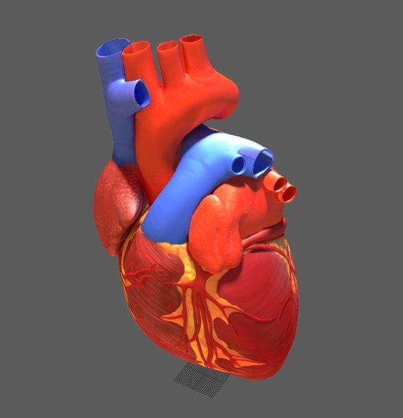 3D human heart anatomy ar