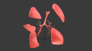 3D lungs human anatomy ar model