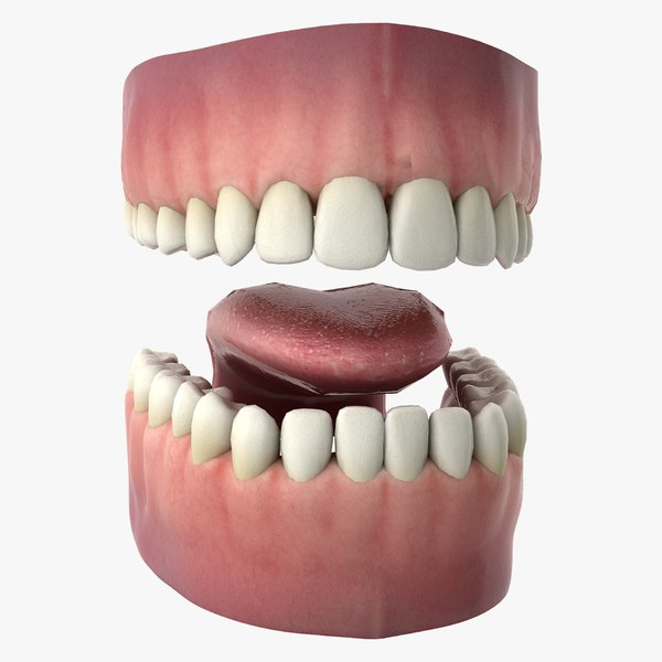 3D rigged human mouth teeth model
