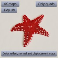 starfish accessory decoration model